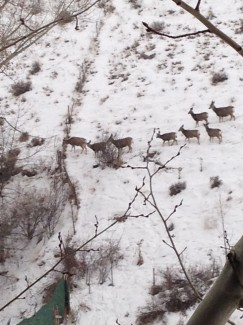 Deer on Saddle Butte