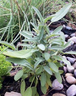 Herb-garden-at-bed-and-breakfast-in-jackson-hole-wy