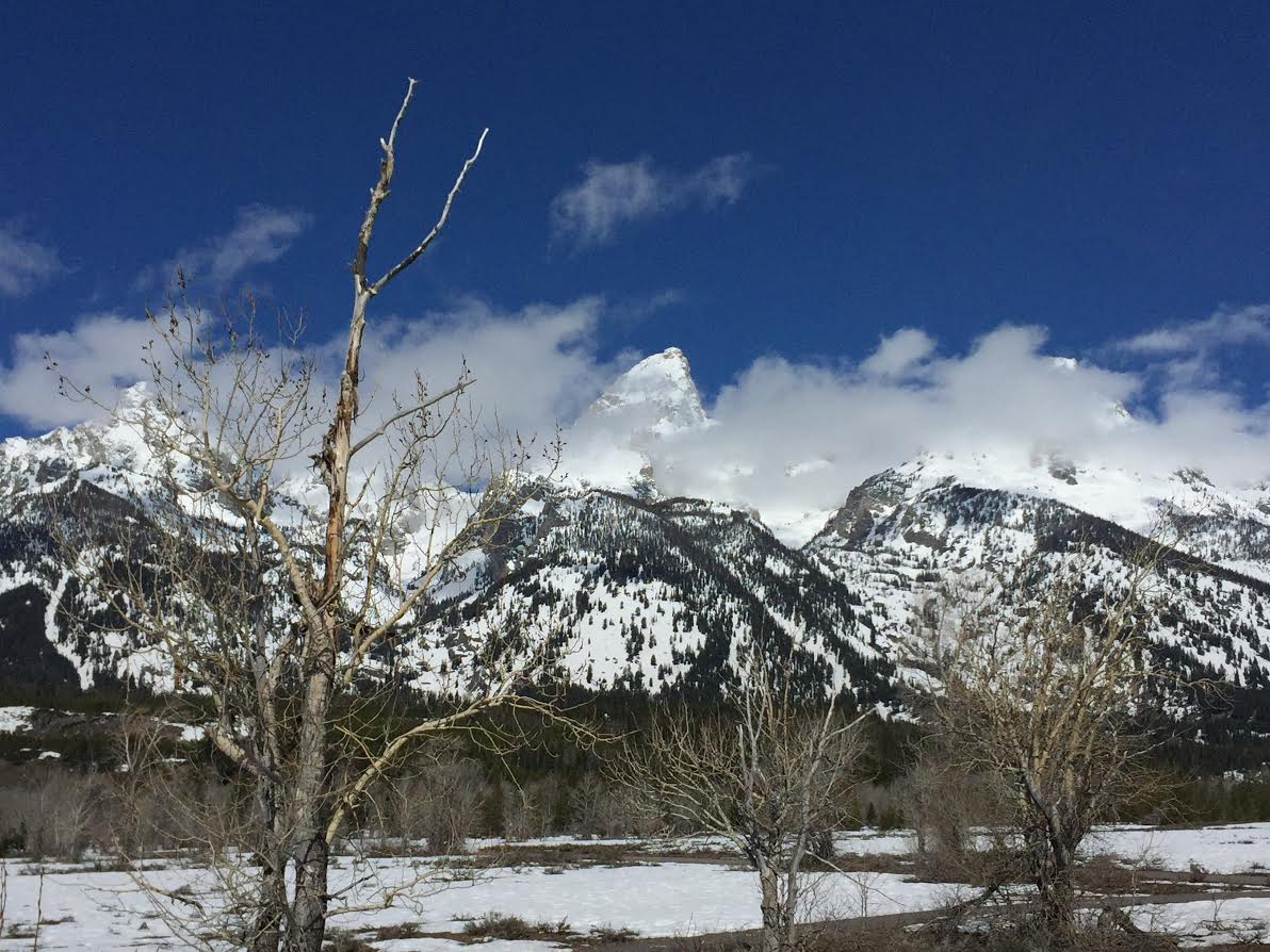 jackson hole lodging special